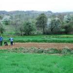 Popović:izdaje se 22.700 hektara zemljišta