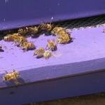 Važno obaveštenje za pčelare!