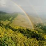 Gradu Pirotu najviše novca za pošumljavanje autohtonim vrstama drveća