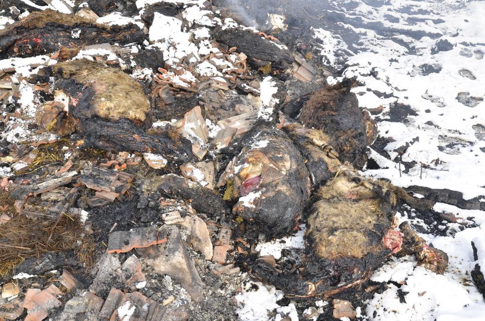 Photo of U podmetnutom požaru izgorelo 48 ovaca i 40 jaganjaca