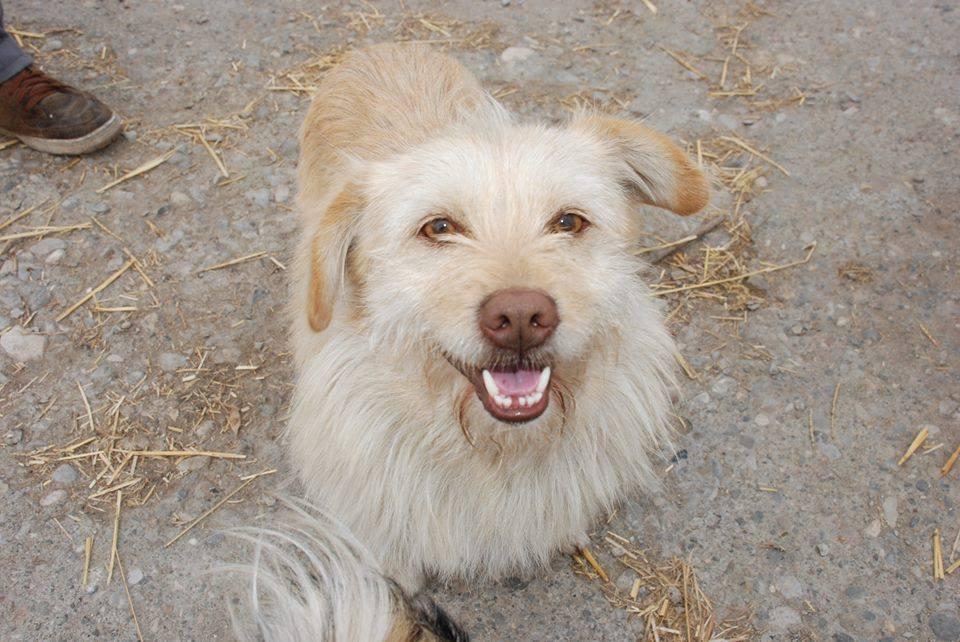 Photo of Malom prihvatilištu za pse hitno potrebna pomoć