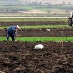 U poljoprivredu investirano oko milion evra