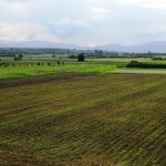 Godišnji Sabor poljoprivrednih proizvođača održava se 26. decembra. U poljoprivredu ove godine uloženo skoro milion evra