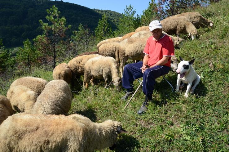 """Photo of Stočari:Sve više ovaca strada od """"plavog jezika"""""""