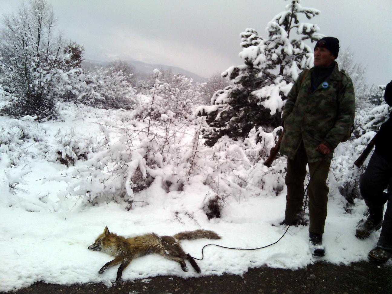 Photo of Magla i sneg spasili vukove na obroncima  Stare planine