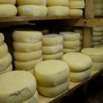 Sve spremno za prvi Festival sira i kačkavalja