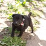 Zabranjeno šetanje pasa bez povoca