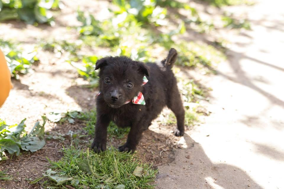 Photo of Zabranjeno šetanje pasa bez povoca