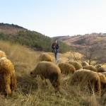 Djurdjevdan: Slava stočara i Roma