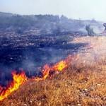 Požar na Suvoj planini zahvatio 40 hektara