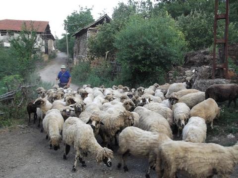 djurdjevdan, slava stocara i roma