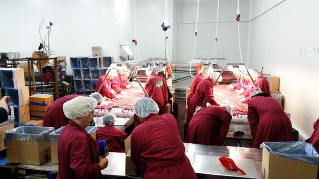 Photo of U hladnjaču investirano više od 3 miliona evra