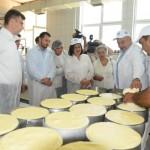 Pirotski kačkavalj biće zaštićen i na međunarodnom tržištu, u korpi sa francuskim sirevima i španskim pršutima?