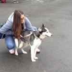 Izložba pasa u Pirotu