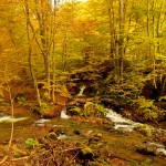 Jesen na Staroj planini(foto)