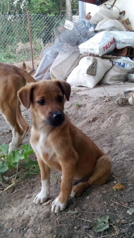 Photo of Budite humani-udomite napuštene pse