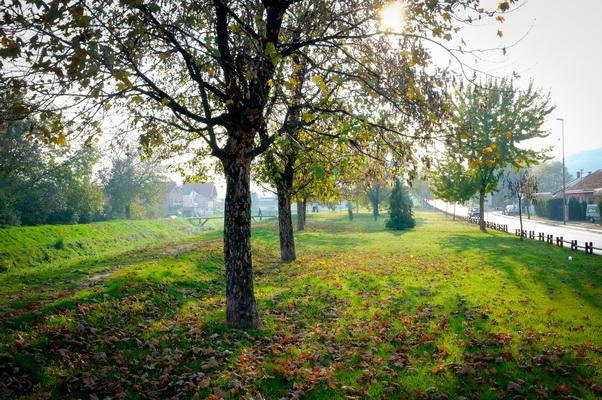 jesen u pirotu-autor aleksandar ciric_02