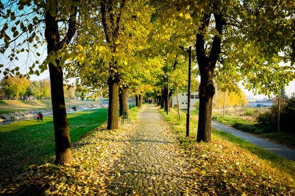 jesen u pirotu-autor aleksandar ciric_06