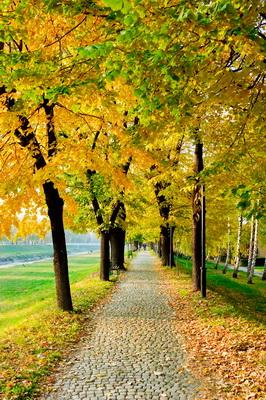jesen u pirotu-autor aleksandar ciric_08