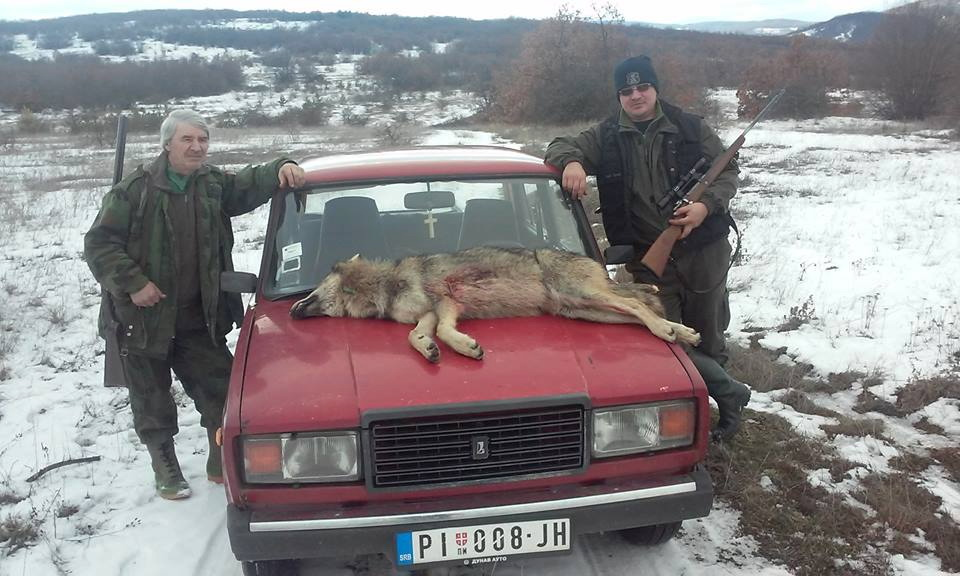 Photo of Na Božuratu odstreljena vučica