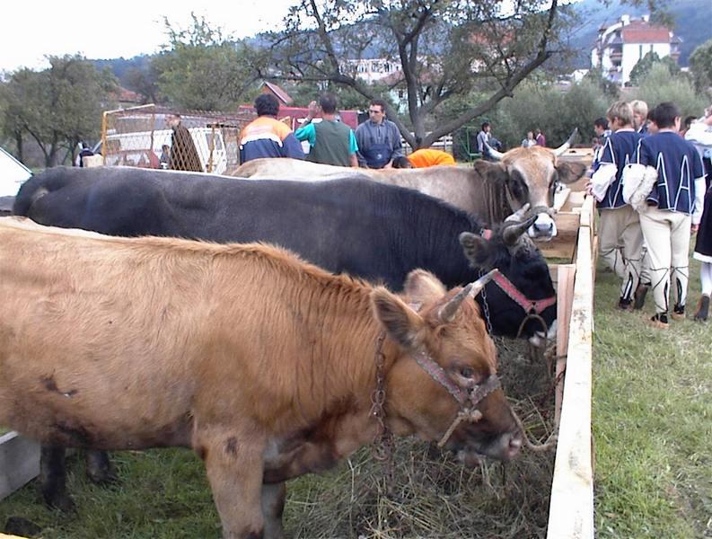 goveda