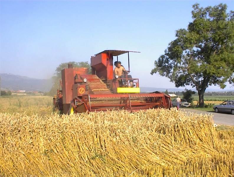 Photo of Srđan Vidanović:4 tone žita po hektaru!