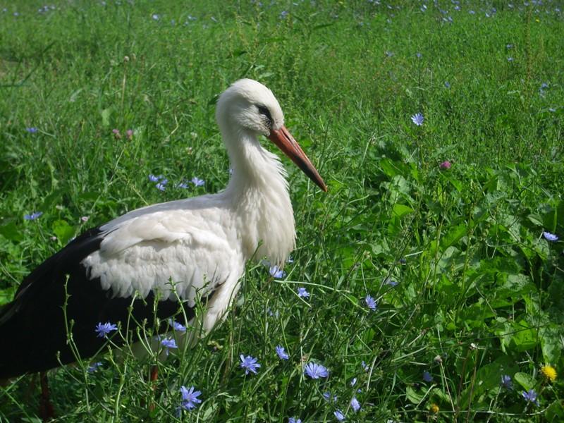 Photo of Povređena roda biće zbrinuta u beogradskom Zoološkom vrtu