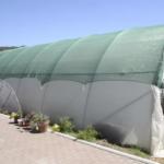 Ugroženim ženama plastenici za proizvodnju povrća