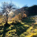 Danas je Miholjdan -  počinje prava jesen