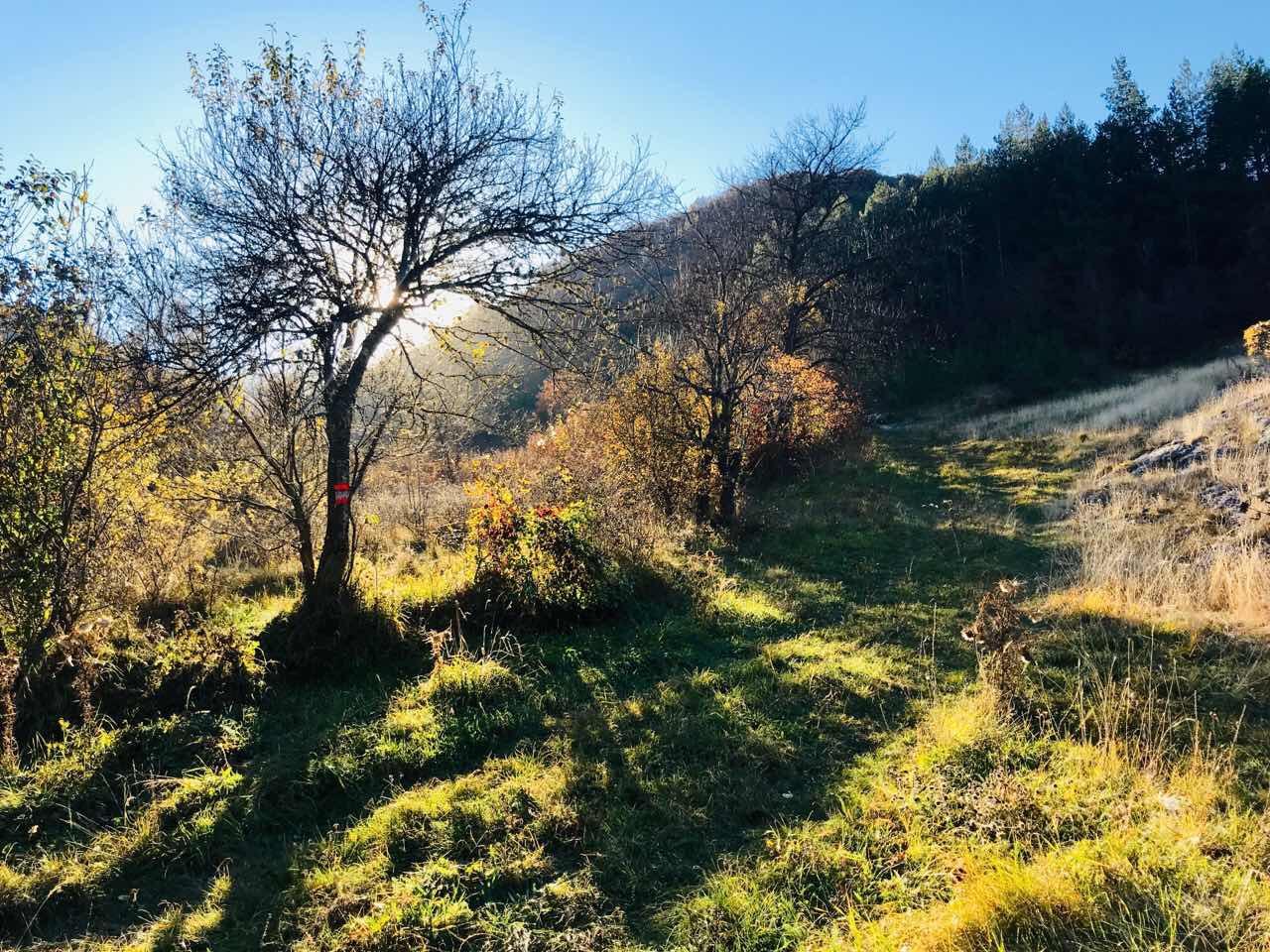 Photo of Danas je Miholjdan –  počinje prava jesen
