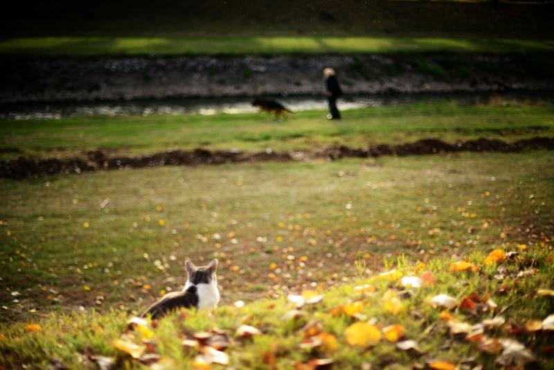 jesen-kej_8_resize