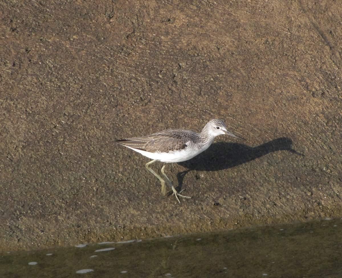 Photo of Kompenzacioni bazen jedan od najznačajnijih centara kada je o bogatstvu ptičijim vrstama reč