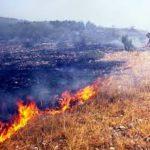 Šumski požar kod Temske
