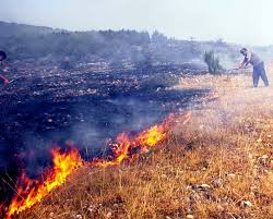 Photo of Šumski požar kod Temske