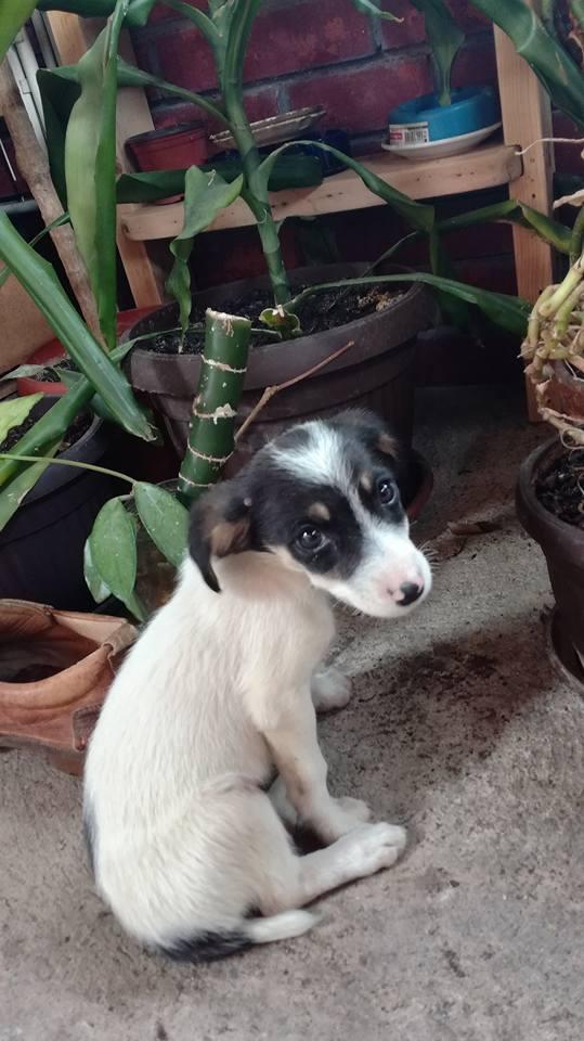 Photo of Humana Piroćanka spasila štene, potreban udomitelj