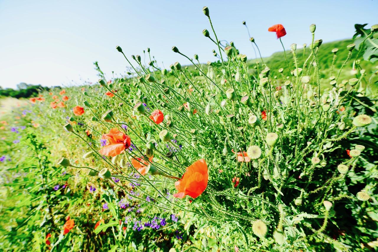 """Photo of Serijal """"Sačuvajmo prirodu"""" – Emisija """"Kako da živim u čistom gradu"""