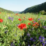 Leto na Staroj planini (foto)