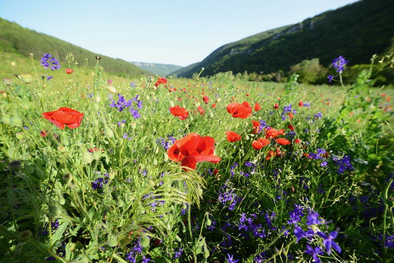 Photo of Leto na Staroj planini (foto)