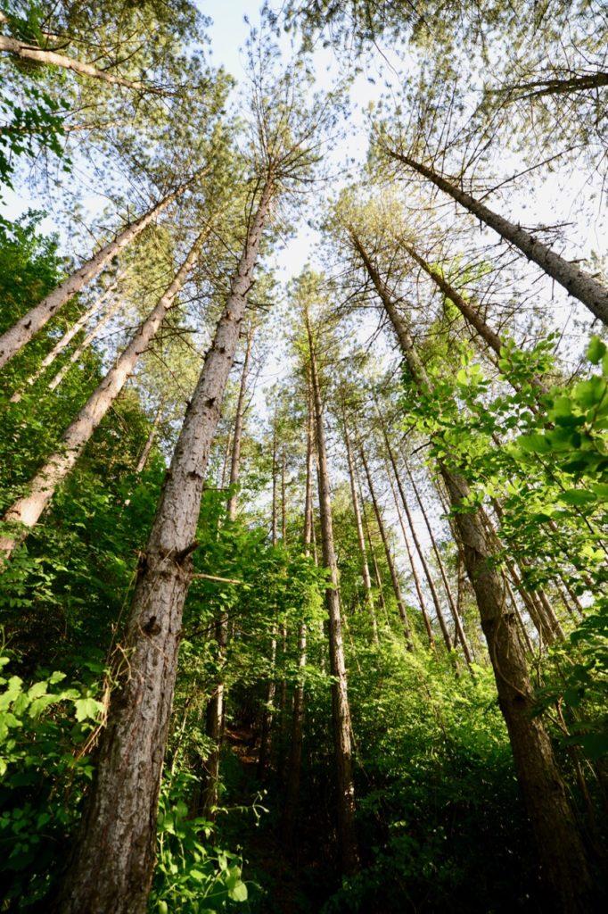 leto stara planina šuma