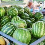 Nišavski brzaci ponovo puni kupača, a tu su i lubenice – prava letnja poslastica