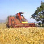 PSS:Prinos pšenice prosečan, oko  3,6 tona