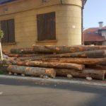 Balvani direktno iz šume – na trotoaru u centru grada