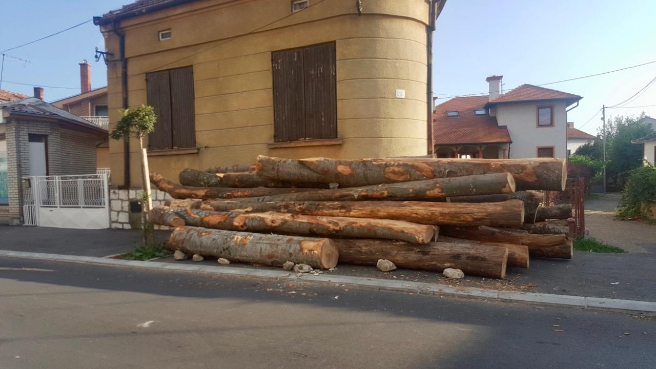 Photo of Balvani direktno iz šume – na trotoaru u centru grada