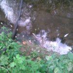 Pomor ribe nizvodno od Dimitrovgrada