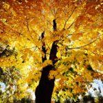 Jesenje lišće Keja pored Nišave (foto)