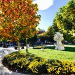 Miholjsko leto u Pirotu