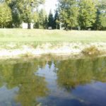 Nemio prizor u Nišavi u centru Pirota - leš psa bačen u reku