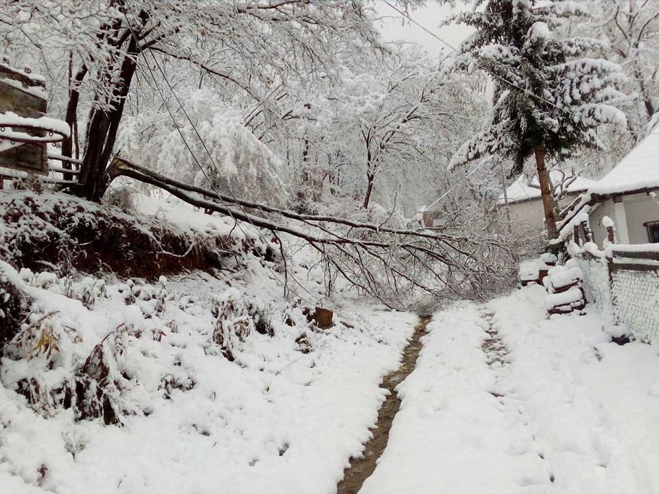 Photo of U babušničkom selu Vrelo palo četvrt metra snega, selo bez struje i veze sa svetom