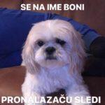 Petarde pogubne po kućne ljubimce, posebno pse, u Pirotu nestala ženka rase Ši-cu