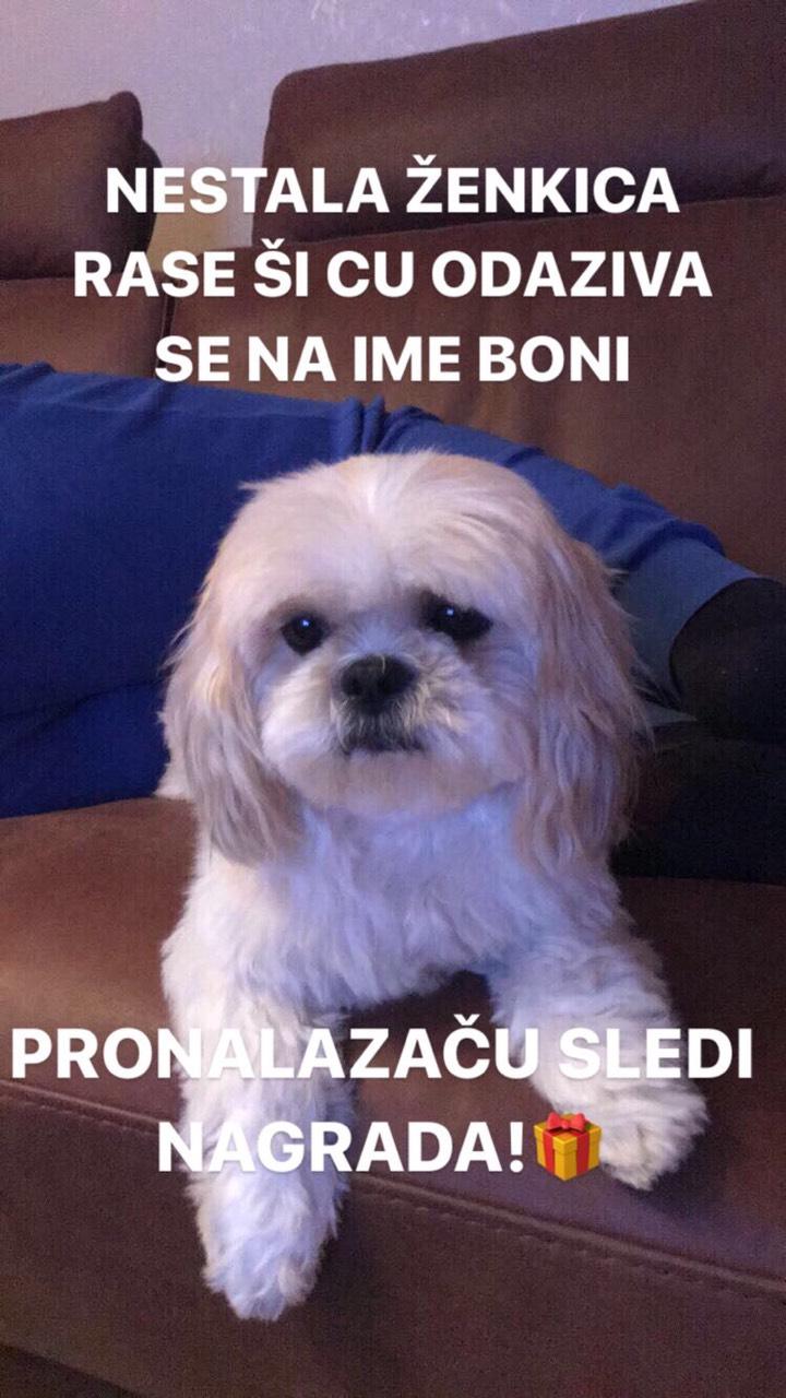 Photo of Petarde pogubne po kućne ljubimce, posebno pse, u Pirotu nestala ženka rase Ši-cu